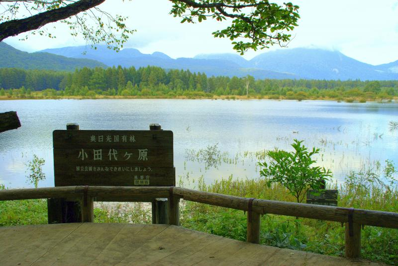 奥日光国有林
