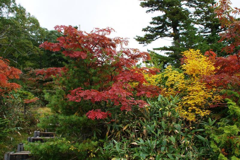 広沢田代周辺のナナカマドの紅葉