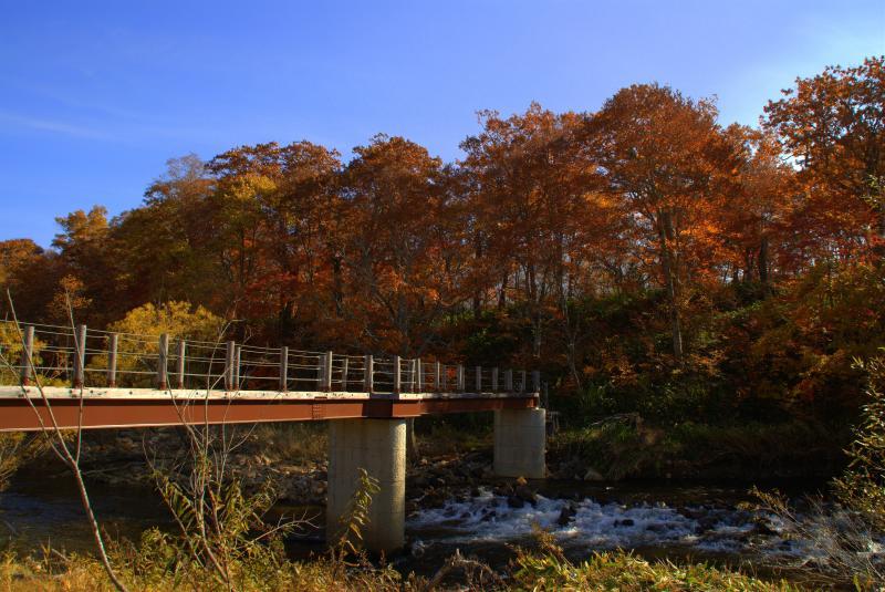 東電尾瀬橋周辺の紅葉