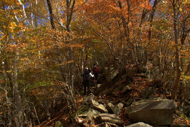 猫岩から駒ヶ岳分岐へ