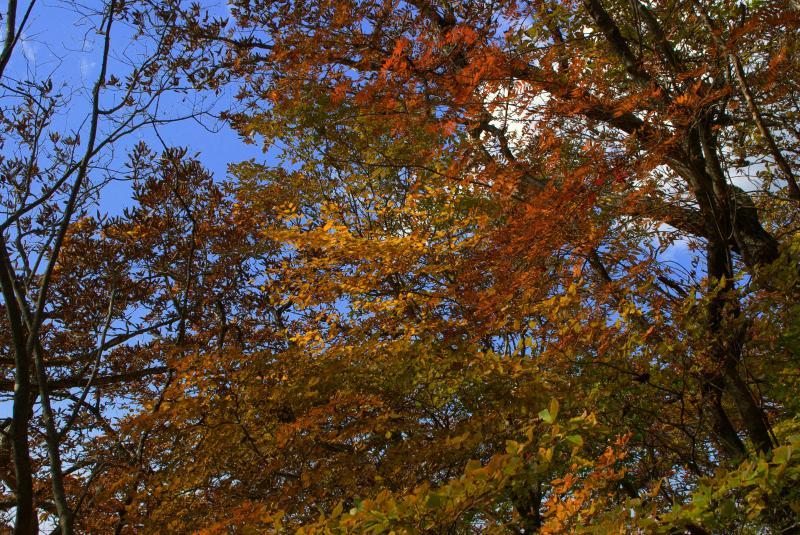 下山途中の紅葉