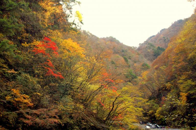 中津峡出合氷の滝周辺の紅葉