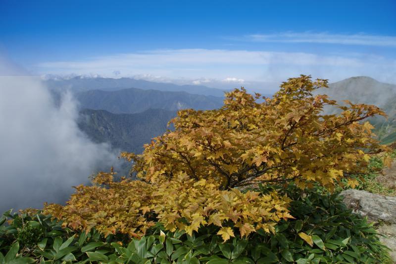 黄葉するカエデと谷川岳周辺の山