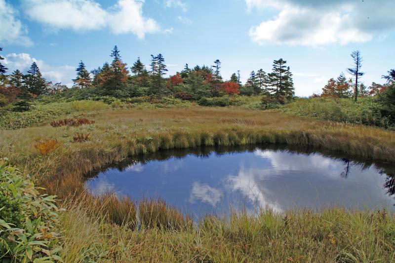 芳ヶ平湿原の池塘(ちとう)