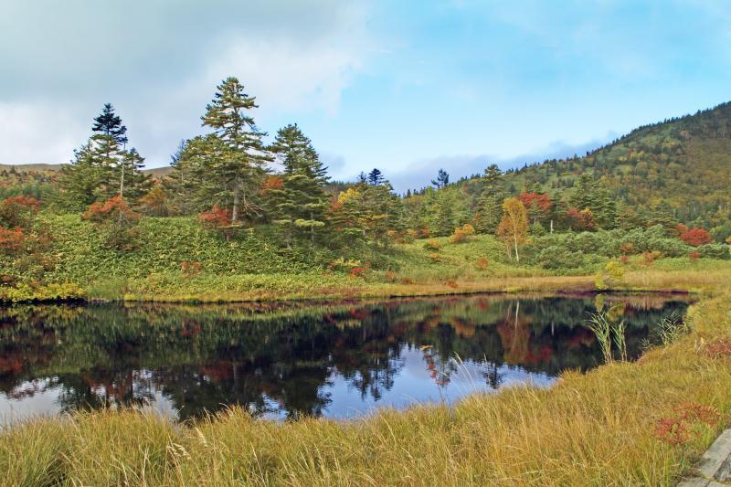 芳ヶ平湿原の池塘(ちとう)-2