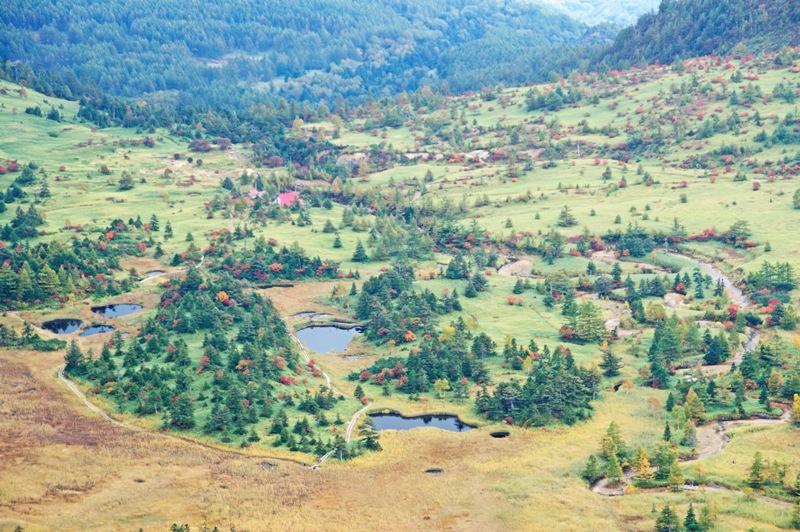 芳ヶ平湿原の全景