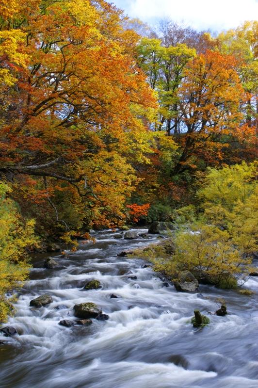 紅葉と川のせせらぎ
