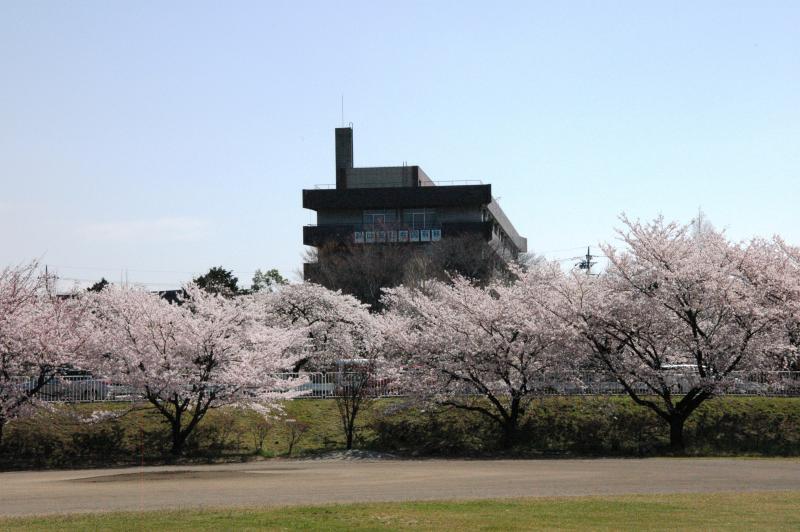 春の関東森林管理局-2