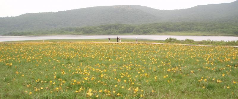 沼とニッコウキスゲ