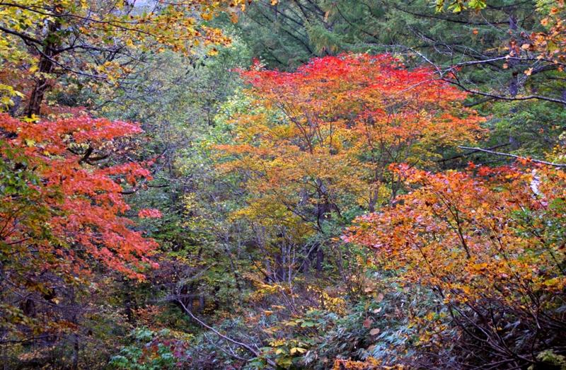 照葉峡の紅葉-2