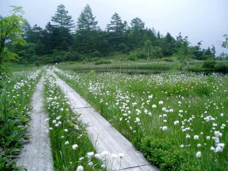 芳ヶ平自然休養林