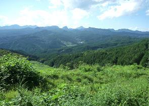 モデル林の全景