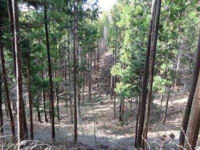 人工林における列状間伐