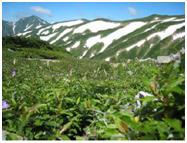 飯豊山周辺森林生態系保護地域
