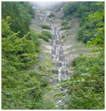 大谷山国有林