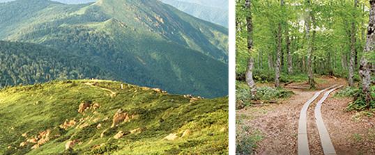武尊自然休養林山あい、森の中