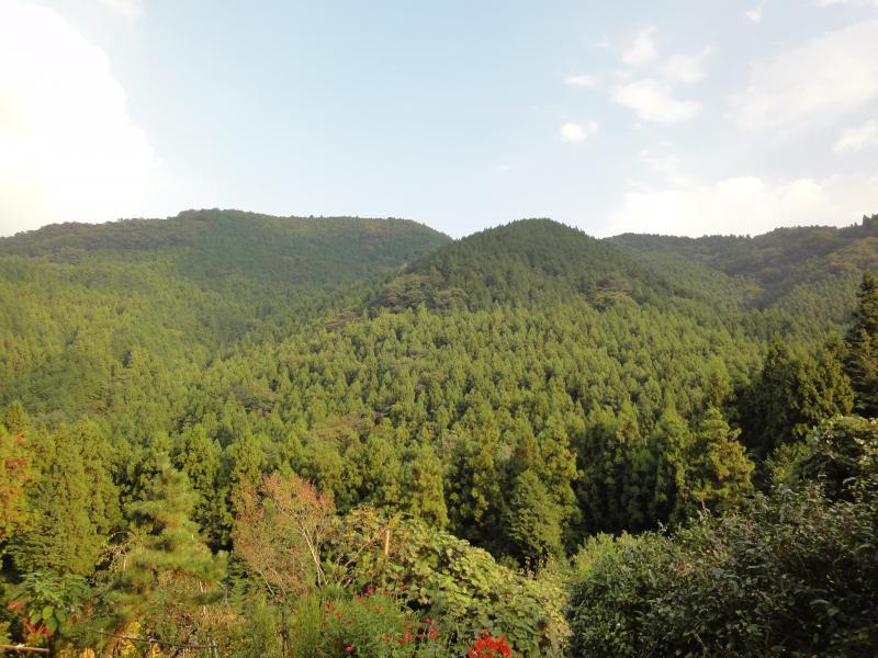 外秩父山地の国有林