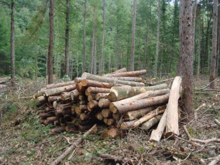 立木システム林地