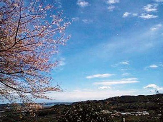 宇利峠の山桜と眺望