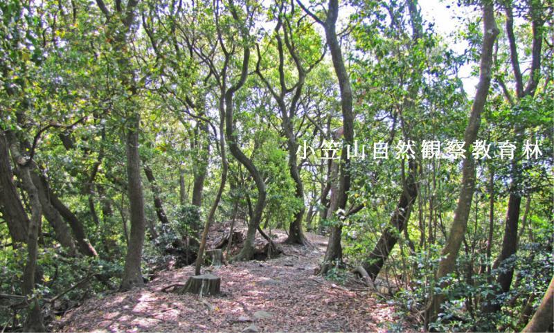 小笠山自然観察教育林