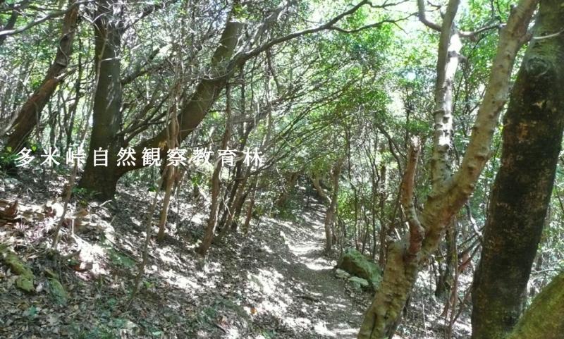 多米峠自然観察教育林