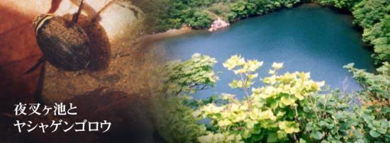 夜叉ヶ池とヤシャゲンゴロウ