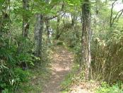 鍋ヶ谷国有林内中国自然歩道