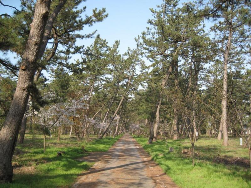 安宅林国有林内サイクリングロードの風景