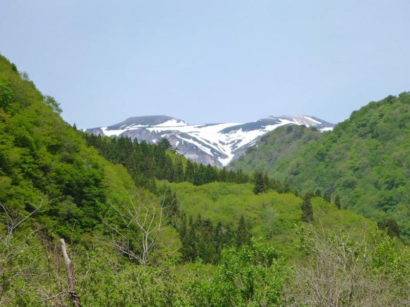 新緑の六万山(手前右)と残雪の白山