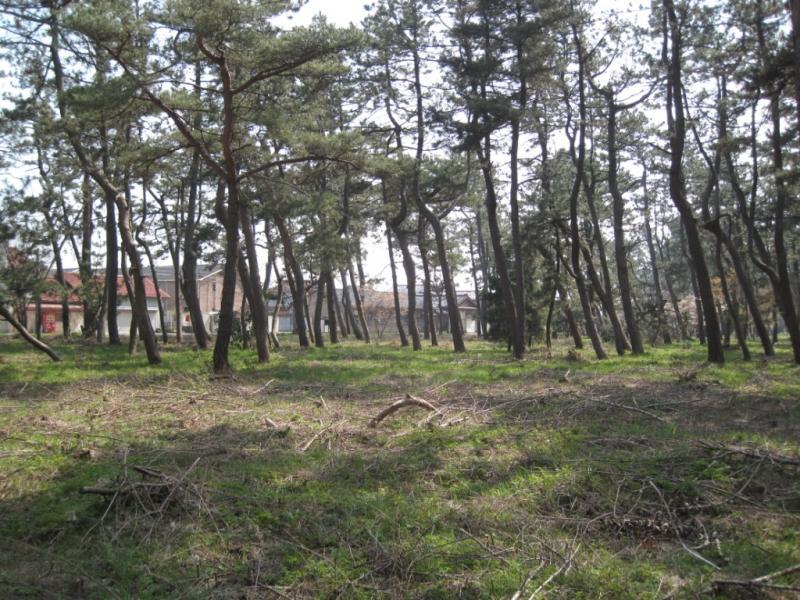 住居を守る防風林