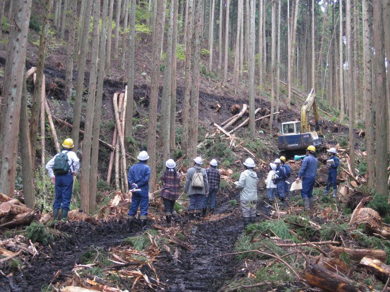 三光山国有林 列状間伐地における間伐木集材の様子 【第二回・岡山】