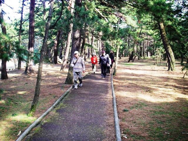 ウッドチップの遊歩道(松原国有林・敦賀市)