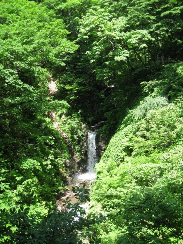 登山道沿いの夜叉滝:岩谷国有林(南越前町)