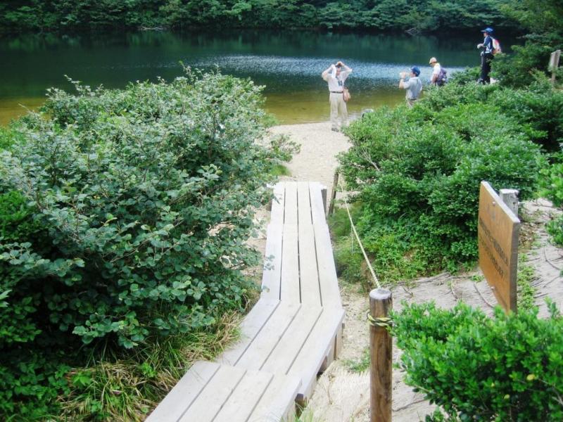ヤシャゲンゴロウの生息環境を保全するための木道:岩谷国有林(南越前町)
