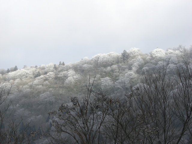 十方山風景林~冬~:十方山国有林(安芸太田町