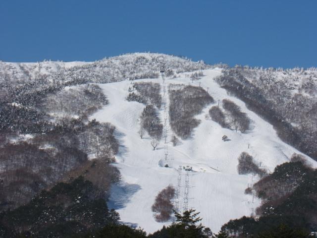 恐羅漢スキー場:横川国有林