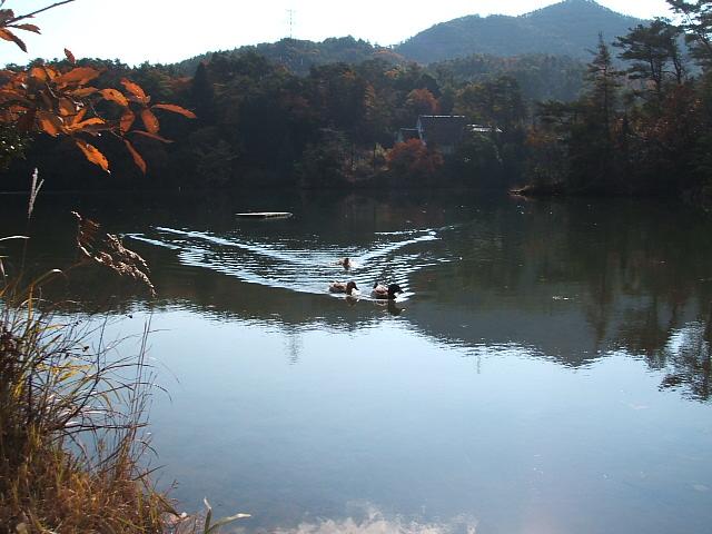 並滝寺自然観察教育林と並滝寺池