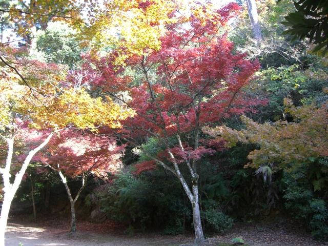 宮島もみじ谷公園の紅葉