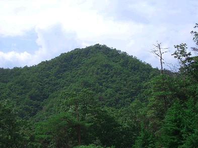 葦獄山(夏) 倉造山国有林