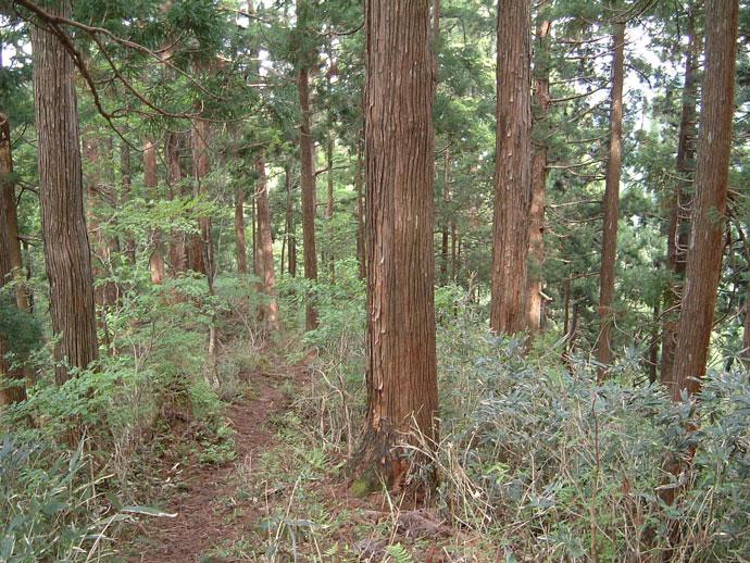 音水林木遺伝子保存林
