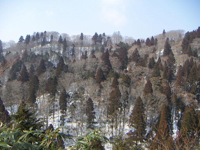 天然林:天児家国有林