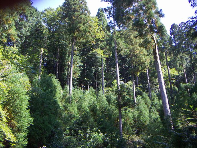 複層林:河原山国有林