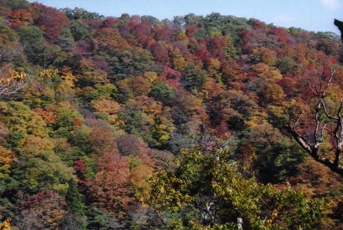 坂ノ谷風景林