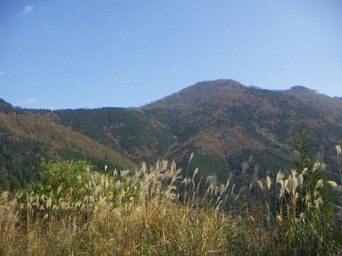 三室山:三室国有林