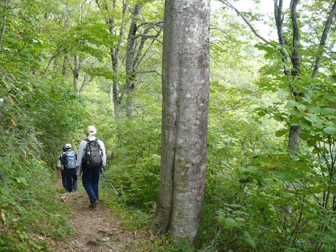 釈迦ヶ岳林木遺伝資源保存林