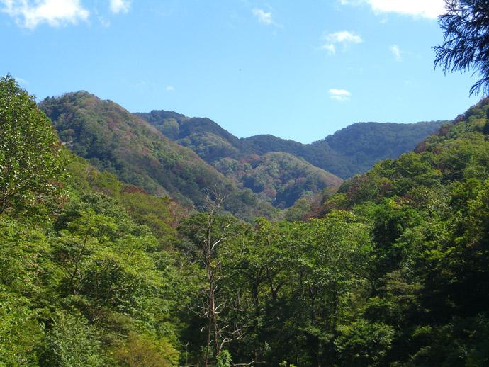 犀川源流森林生物遺伝資源保存林:犀川国有林