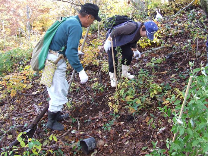 ボランティアによる森林整備:花立国有林