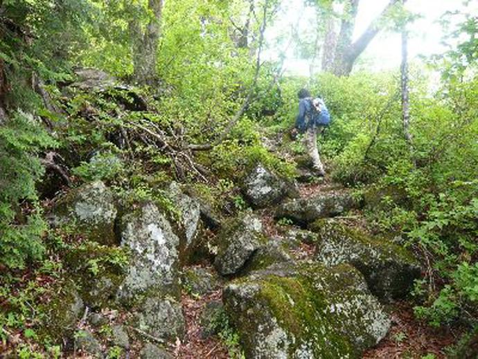 白山登山道「越前禅定道」(梯子坂):六万山国有林付近