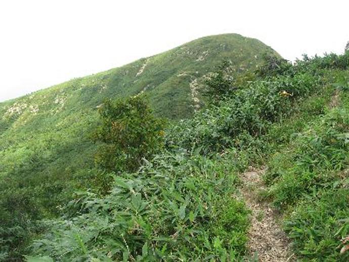 白山登山道「釈迦新道」:釈迦ヶ岳国有林
