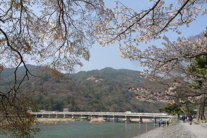 嵐山(桜)